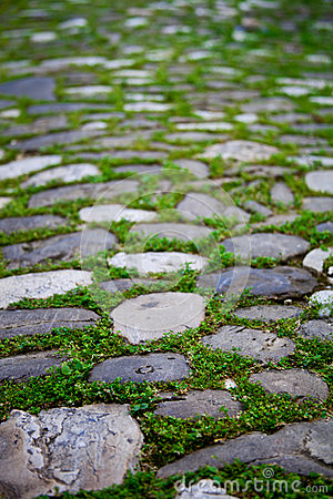Cobbles with moss on a pavement