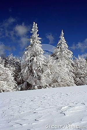 Coberto com a neve