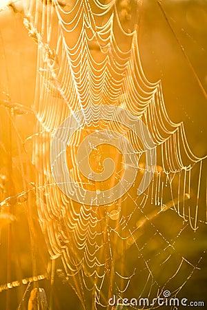 A cobweb at dawn