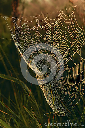 Free Cobweb In Grass Meadow Royalty Free Stock Images - 73642809