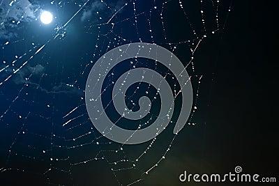 Cobwebs  full moon  background