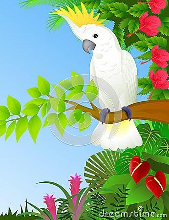 Cockatoo dans la forêt