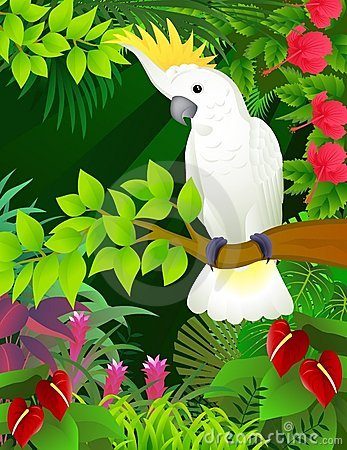 Cockatoo in the forest