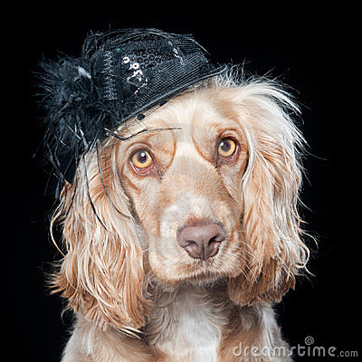 Cocker with hat