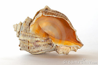 Cockle-shell