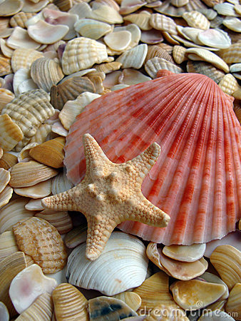 Free Cockleshell And Starfishes Stock Image - 11676791