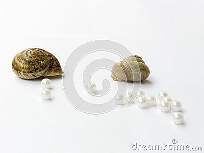 Cockleshells and pearls