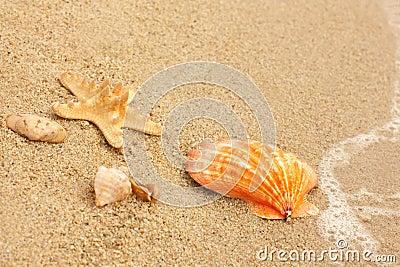 Cockleshells and a starfish