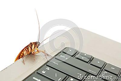 Cockroach climbing on keyboard