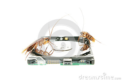 Cockroaches climbing on hard disk drive