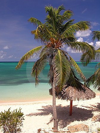 Free Coco Beach Stock Image - 198251