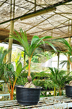 Coco bonsai shop