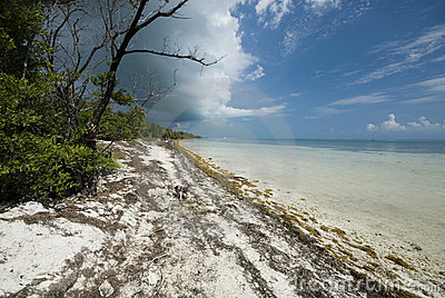 Coco plum beach florida keys
