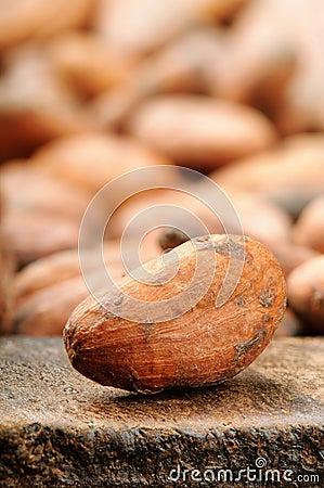 Cocoa bean. Macro