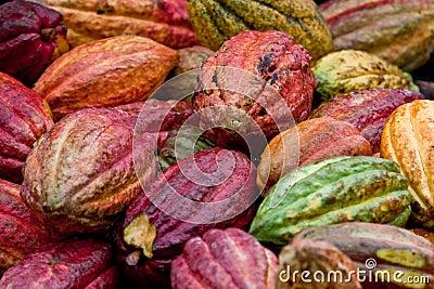 Cocoa bean pods