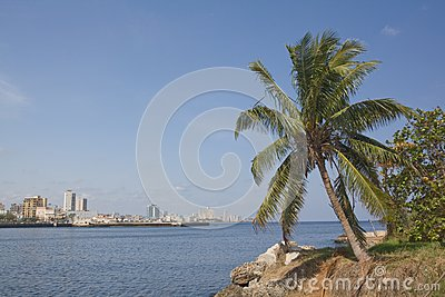 Coconot tree in Havana City bay entrance