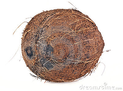 Coconut Royalty Free Stock Photography - Image: 22722147
