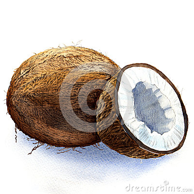 Free Coconut Stock Photo - 43120020