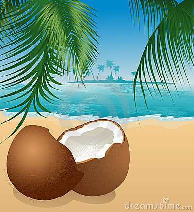 Coconut on the beach under palm tree