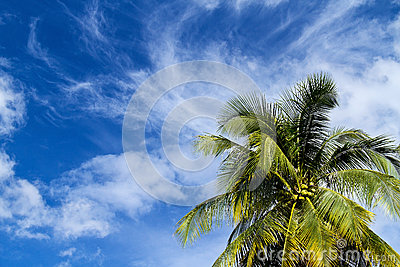 Coconut on blue sky