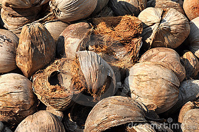 Coconut Brown Husk Hairy