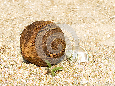 Coconut, conch shell and green sprout on sand.