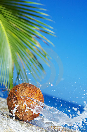 Free Coconut Crack Royalty Free Stock Images - 3686829