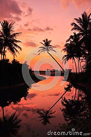 Coconut evening sunset