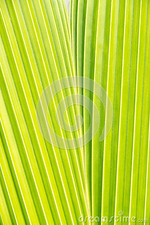 Coconut leaf pattern detail