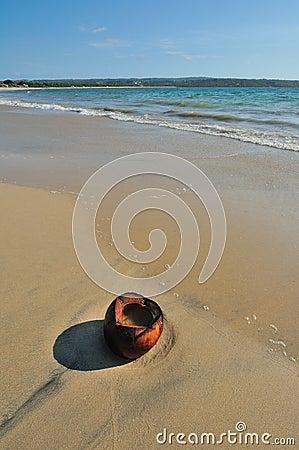 Free Coconut On A Beach Stock Photo - 17794130
