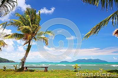 Coconut palm on island