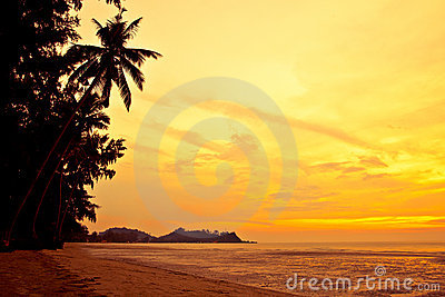 Coconut palm on sand beach in tropic on sunset