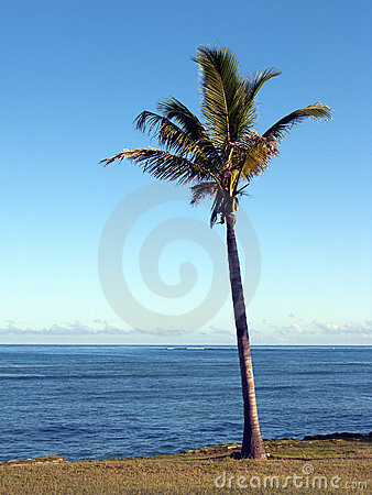 Coconut palm and sea