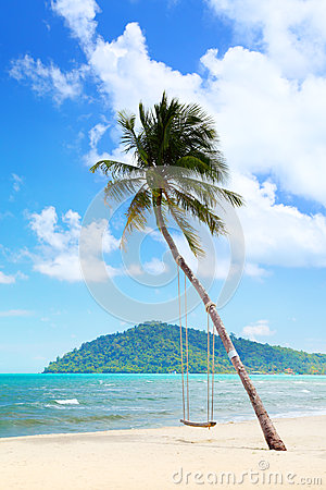 Coconut palm with swings on the beach