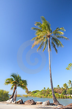 Coconut palm tree on beach
