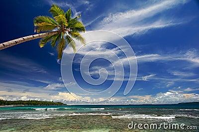 Coconut palm tree on beautiful island