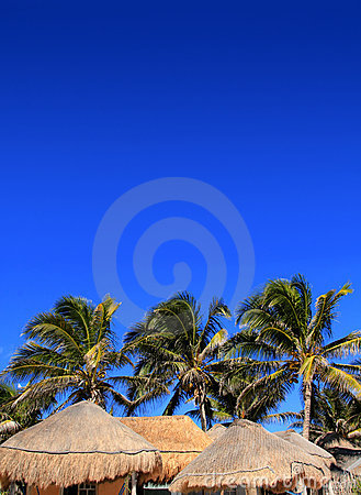 Coconut palm tree blue sky hut palapa sun roof