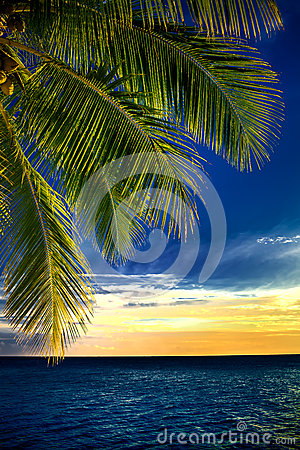 Coconut palm tree leaves over endless ocean