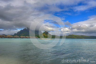 Coconut Palm Tree Moorea Beach French Polynesia