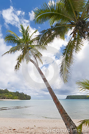 Coconut Palm Tree over tropical white sand beach