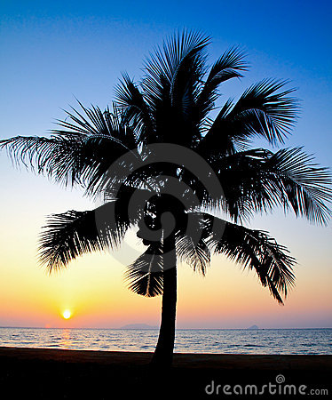 Coconut palm tree silhouetted against sunrise