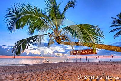 Coconut palm tree at sunset on Koh Kho Khao island