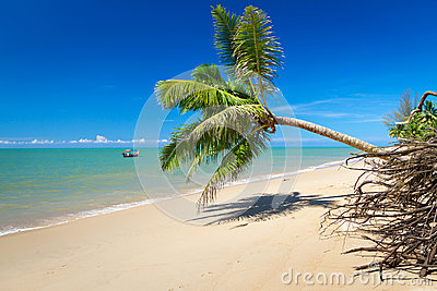 Coconut palm tree on the tropical beach