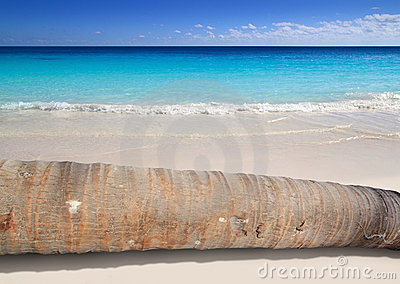 Coconut palm tree trunk lying on turquoise beach