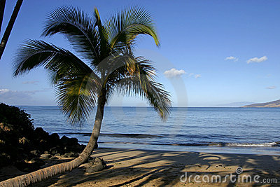 Coconut palm trees at the beach