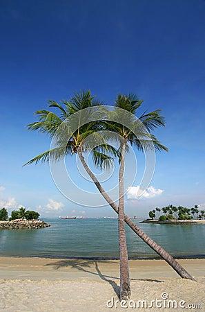 Coconut palm trees on beach