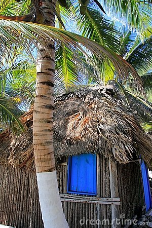 Coconut palm trees palapa hut beach