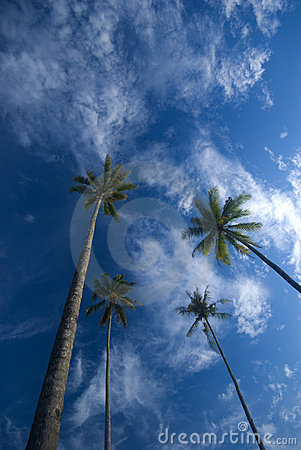 Free Coconut Palm Trees Reaching Out To Skies Stock Photography - 5900712