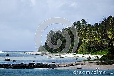 Coconut palm trees on a tropical beach
