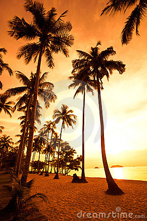 Free Coconut Palms On Sand Beach In Tropic On Sunset Royalty Free Stock Image - 11958526